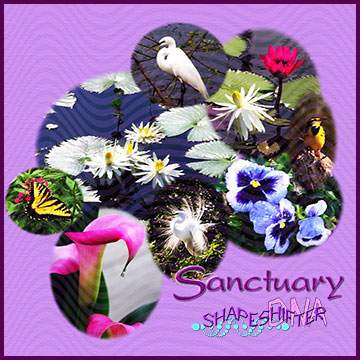Sanctuary CD Cover